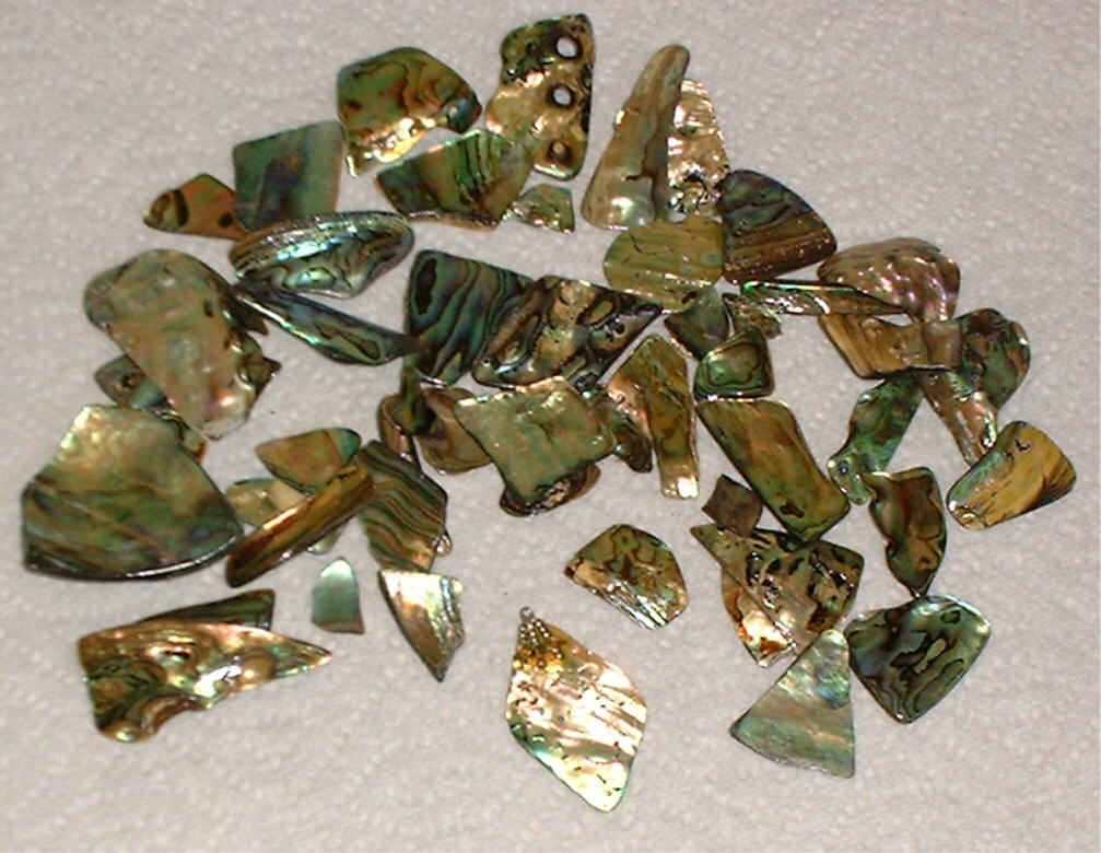 abalone_pieces_2.jpg